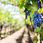 Specyfika wina mszalnego