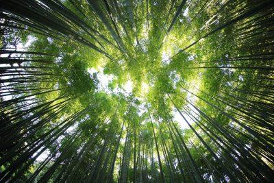 Las, puszcza, drzewa, wiosna,